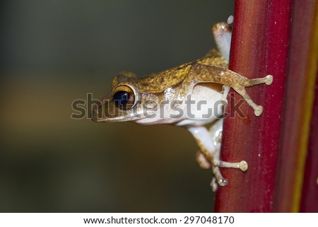 Frog perched on a tree ready to jump. - stock photo