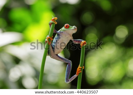 frog red eyes, standing between two stalks
