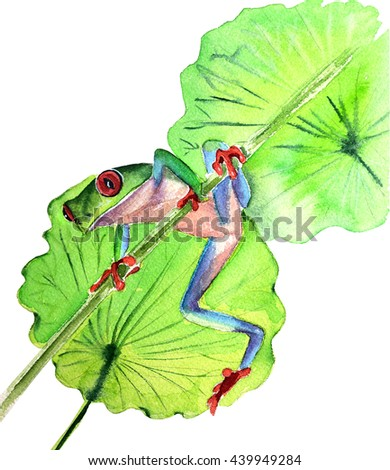 frog sitting on a branch white background