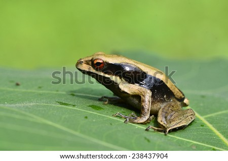 Frog sitting on the green leaf with nice blur background - stock photo