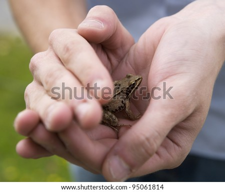 Frog trapped in human hands