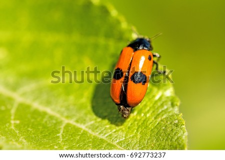 froghopper, endangered insect in Germany