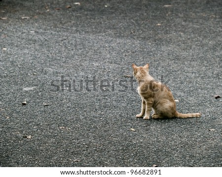 From behind the cat - stock photo