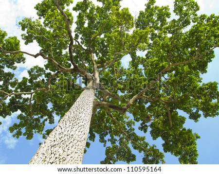 From the bottom of the tree. Sky background - stock photo
