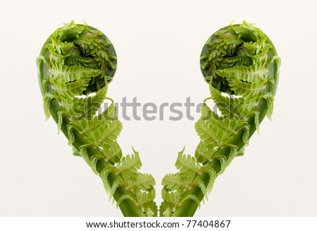 fronds of fern on the white background