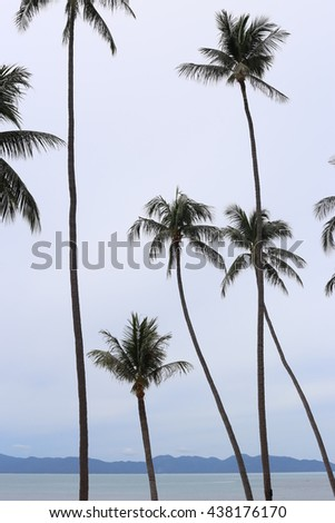 Front of view of an island with coconut trees as foreground. Portrait oriented.