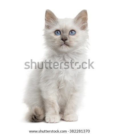 Front view of a Birman kitten sitting, isolated on white (3 months old) - stock photo