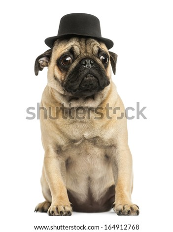 Front view of a Pug puppy wearing a top hat, sitting, 6 months old, isolated on white - stock photo
