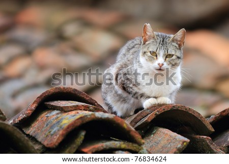 front view of cat on tile roof - stock photo