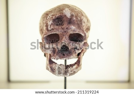 Front view of human ancestor skull in showcase, evolution concept - stock photo