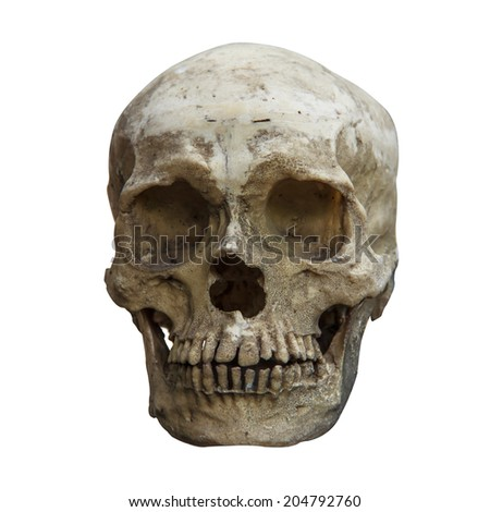 Front view of human skull and clipping path. - stock photo