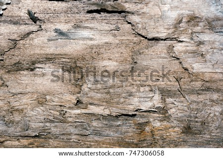 Front view of old grey wood background or texture. Copy space. Place for text. graphical resource