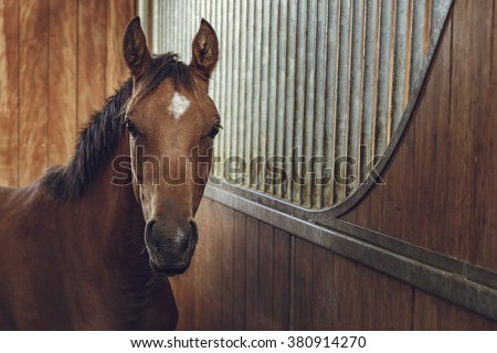 Front view portrait of an attentive curious chestnut young stallion in a stable. - stock photo