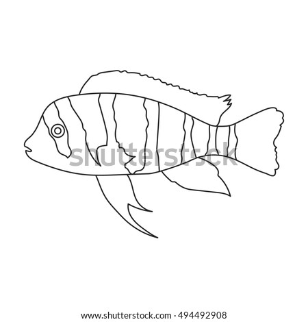 frontosa cichlid cyphotilapia frontosa fish icon line singe aquarium fish icon from the sea