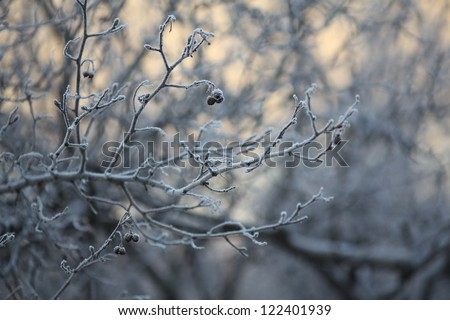 frost and snow on the branches, winter background, white branches without leaves, soft milky color