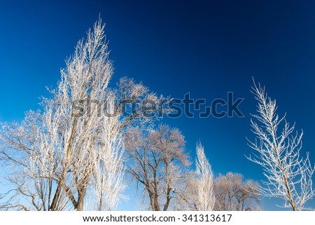 Frost covered branches on trees in the middle of winter against a steel blue sky.