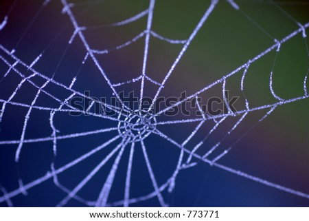 Frost Covered Spiders Web