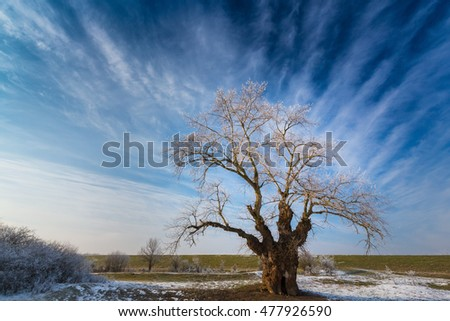 Frost covered tree in winter, profiled on sky with clouds