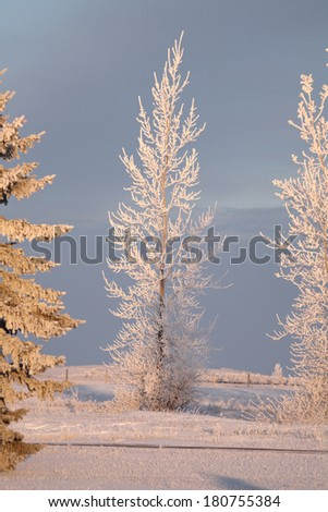 Frost covered trees in rural Saskatchewan - stock photo