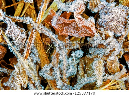 Frost leaves, frozen leaves, icy grass.
