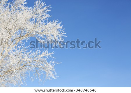 Frost on a Tree branches. Frosty winter day - snowy branch closeup. - stock photo