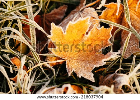 Frost on the leaf and grass. - stock photo