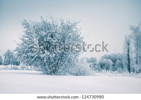 Frost tree in winter forest on morning with fresh snow