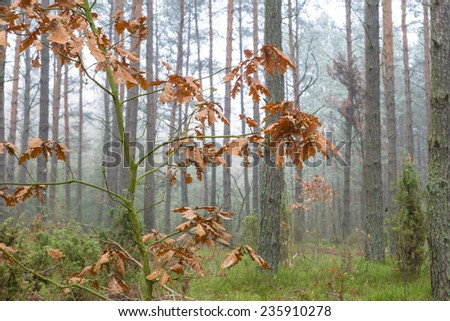 frosted autumnal leaves - stock photo