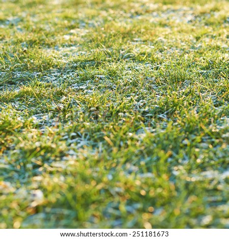 Frosted morning meadow green grass close-up photo