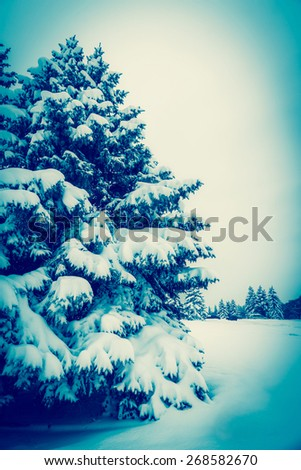 Frosted tree - stock photo