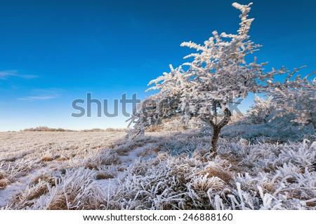 Frosted tree against clear blue sky. Plateau Chatyr Dag, Crimea - stock photo