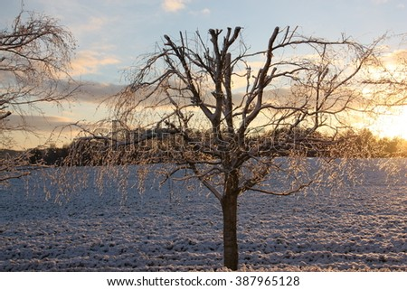 Frosted tree in Denmark