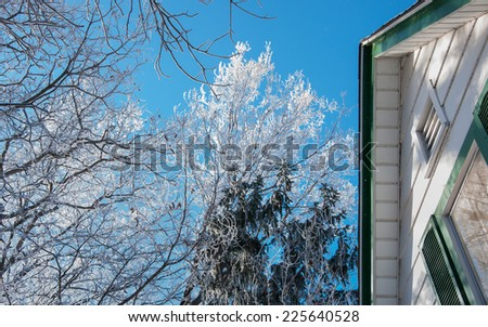 frosted tree tops in mid winter morning - stock photo