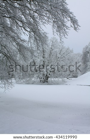 Frosted trees and a frozen pond in a winter forest - stock photo