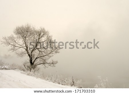 Frosted trees and grass on the shore