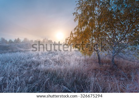 Frosty autumn morning landscape with birch trees. - stock photo