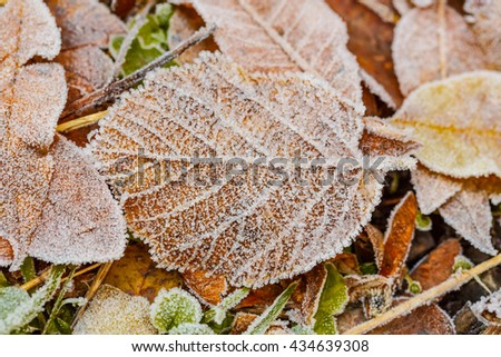 Frosty brown leaf in the woods in Autumn - stock photo