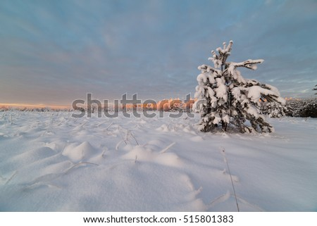 Frosty day in a forest glade. Winter landscape