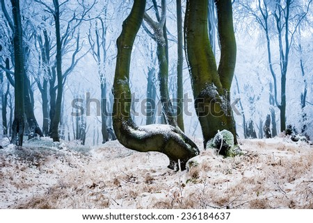 Frosty forest in cold winter day
