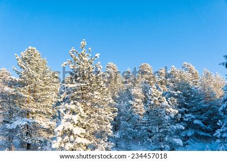 Frosty Glow Icy Forest  - stock photo