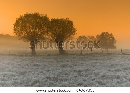 frosty sunrise above the meadow - stock photo