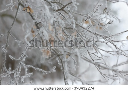 Frosty tree branch with snow in winter - stock photo