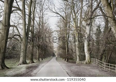 Frosty Trees - stock photo