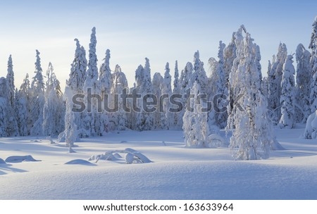 Frosty winter.  Fantastic snow figures on trees.  - stock photo