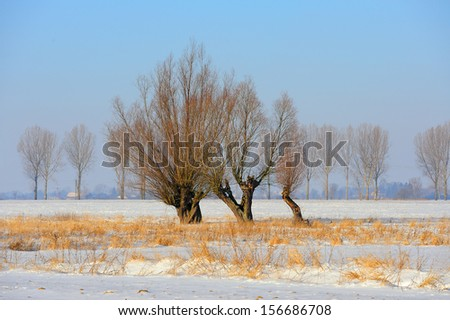 Frosty winter tree illuminated by the rising sun. - stock photo