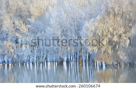 Frosty winter trees on Danube river - stock photo