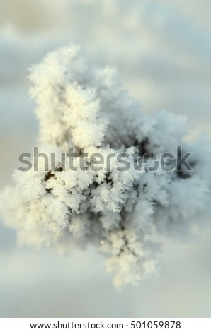 frozen abstract tree branches and plants in winter snow