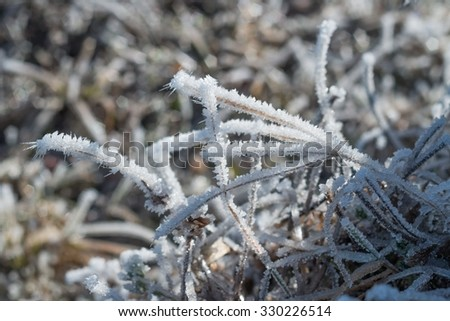 Frozen after icy night frost on a clear sunny day, grass, winter - stock photo