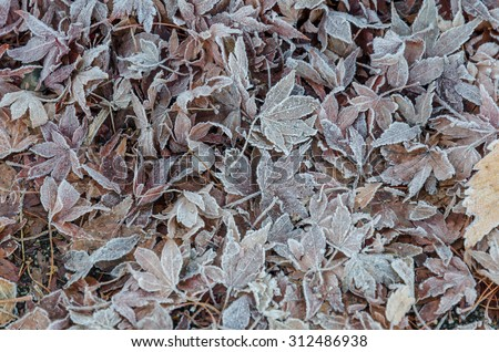 Frozen autumn frost cold morning ice leaves - stock photo