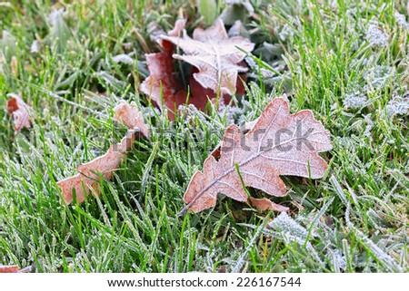 Frozen autumn leaf - stock photo